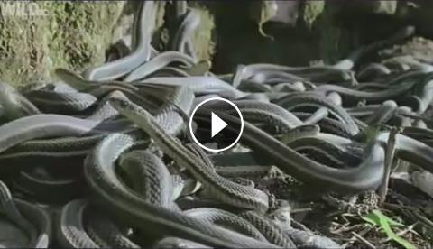 فیلم جفت ري حيوانات با انسان مستند جفت گیری حیوانات 2018 - دانلود نرم افزار   دانلود ...