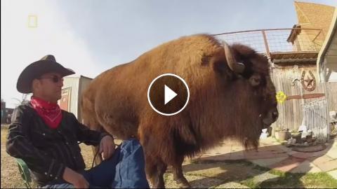 فیلم جفت ري حيوانات با انسان عجیب ترین حیوانات خانگی جهان